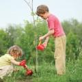 як садити саджанці