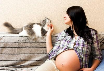 вагітність і кіт