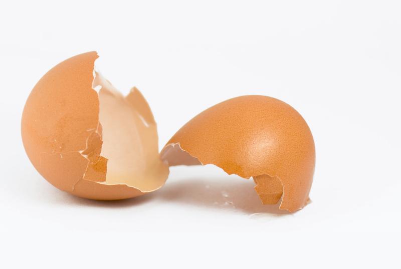 скарлупа яєць