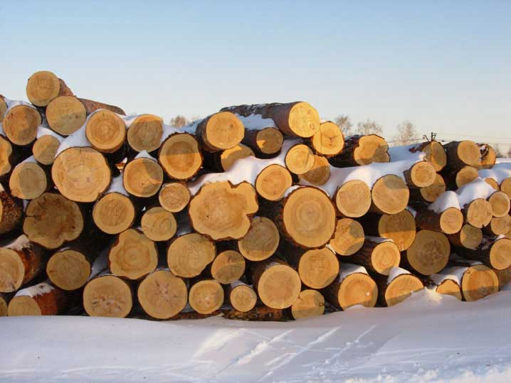 Породи деревини