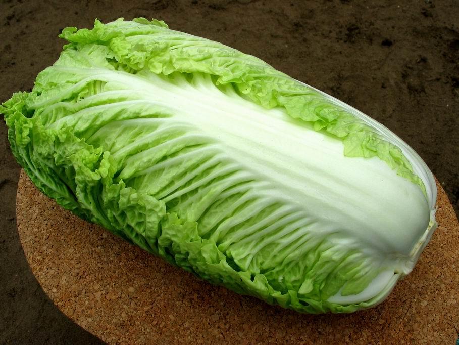 Як виростити пекінську капусту